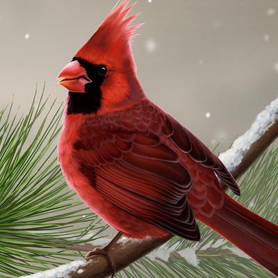 Martina nachazelova nothern cardinal male25