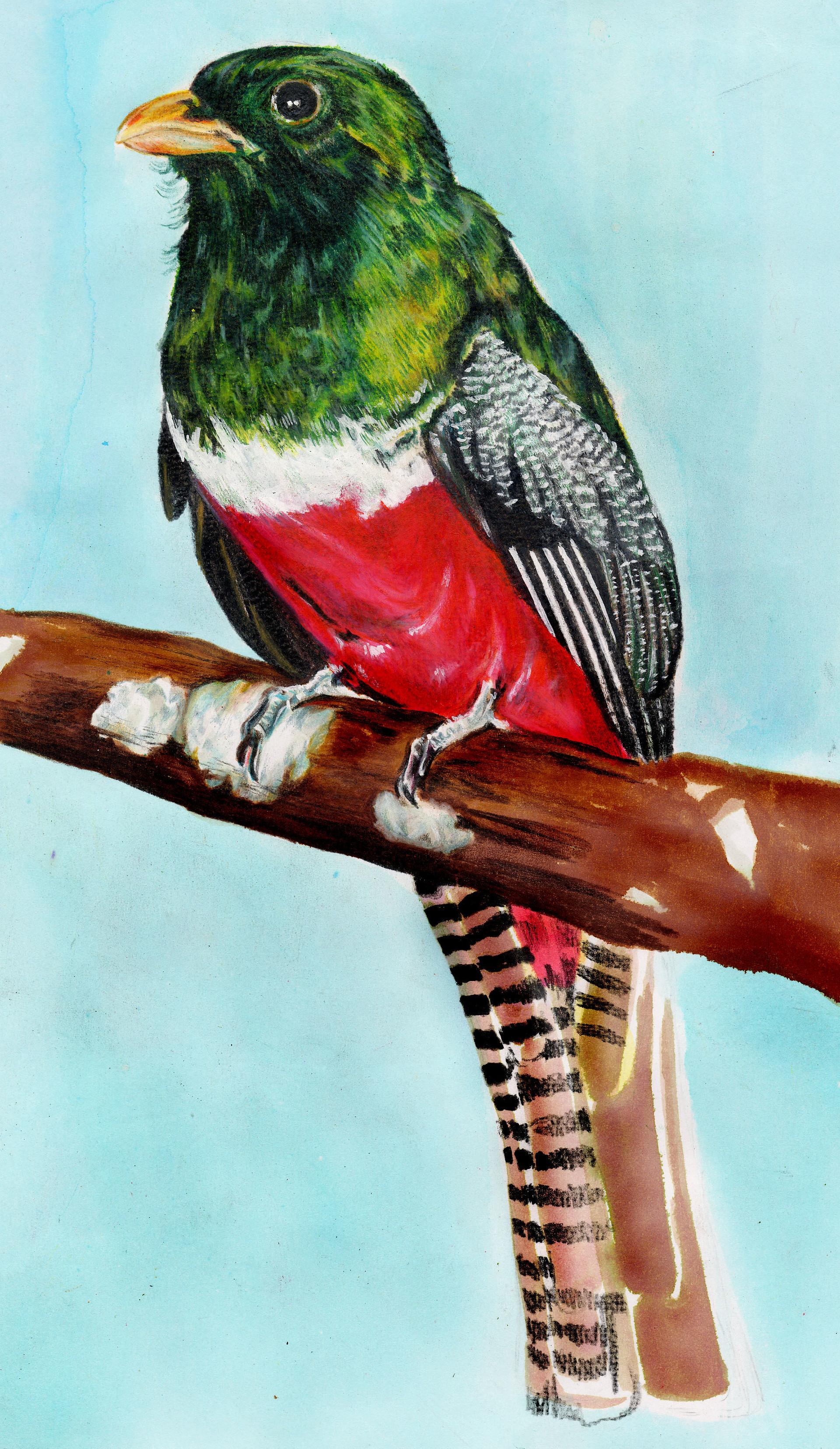 Patricia vasquez de velasco ave