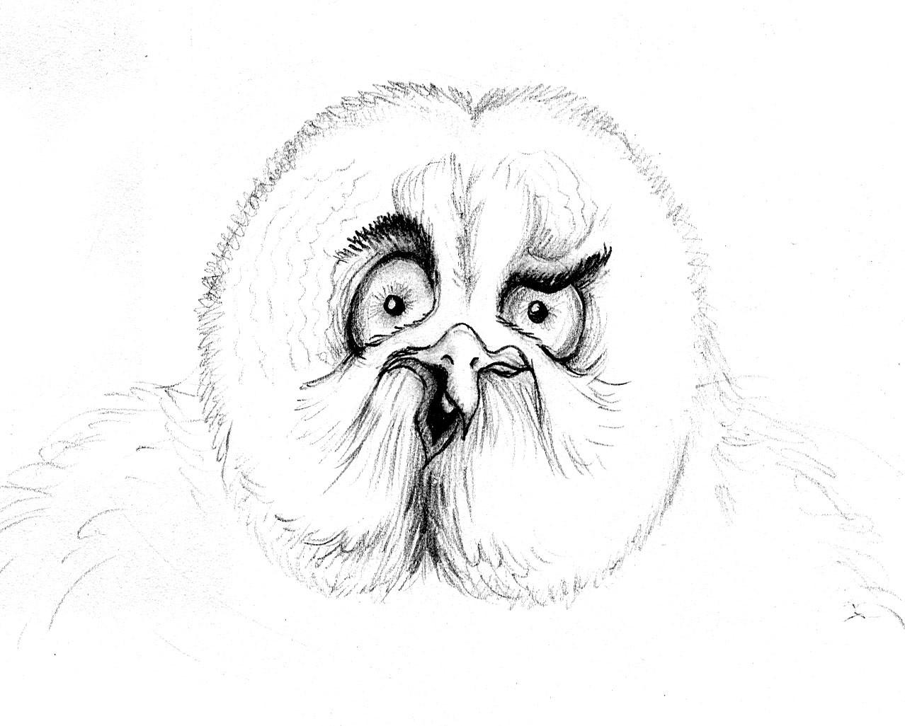 Patricia vasquez de velasco animales bocetos 01b