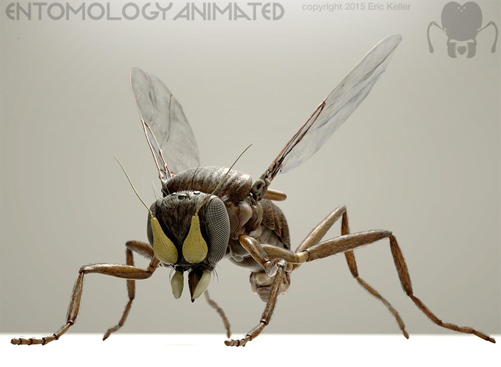 Eric keller coffinfly