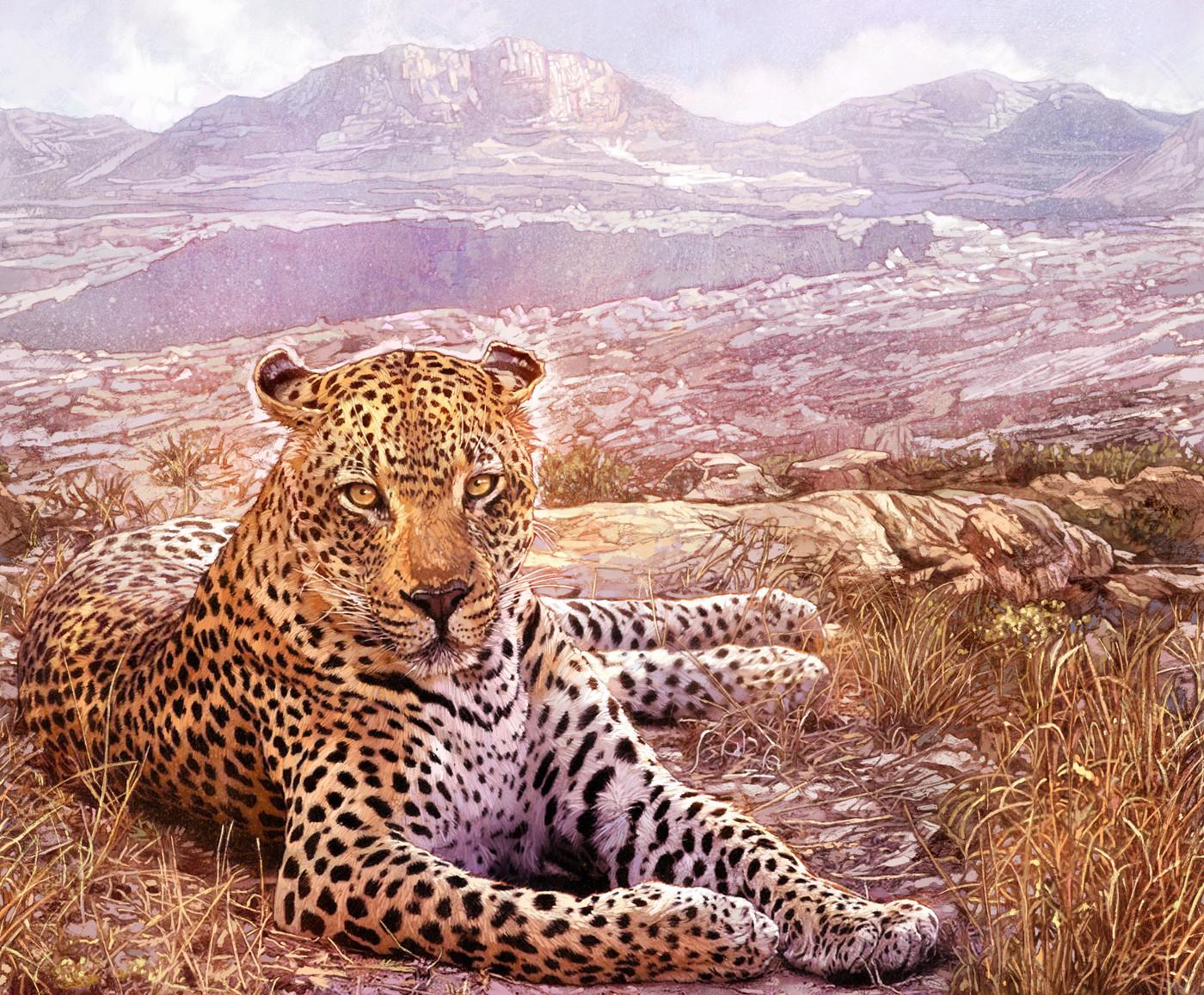Kinsun loh leopard01