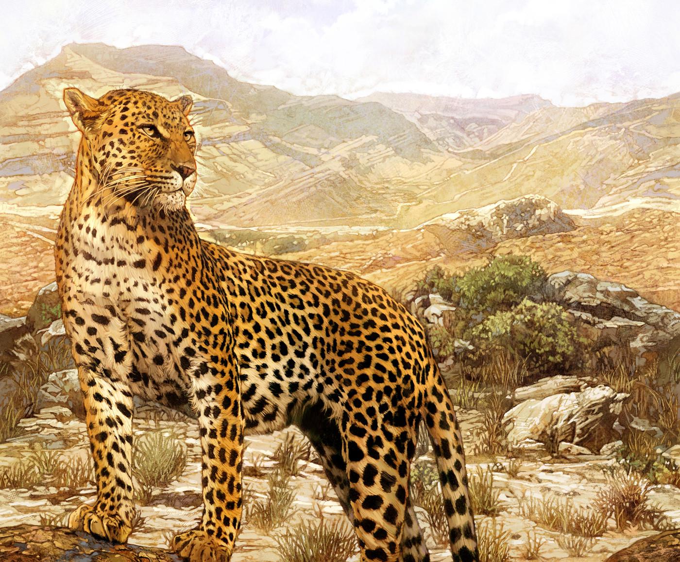 Kinsun loh leopard03