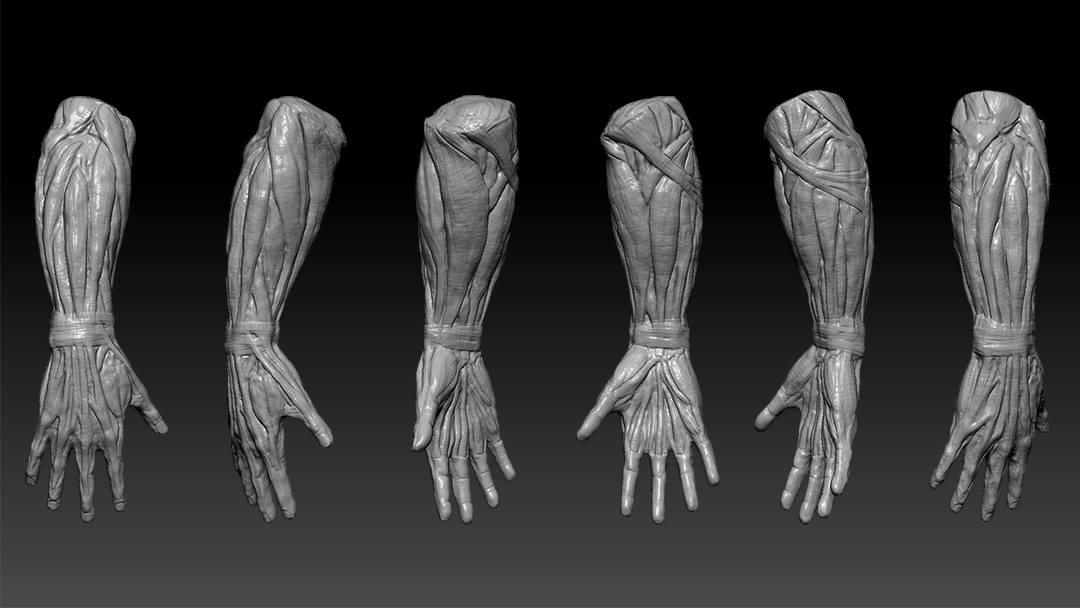 ArtStation - hand anatomy study, Pat. Ch