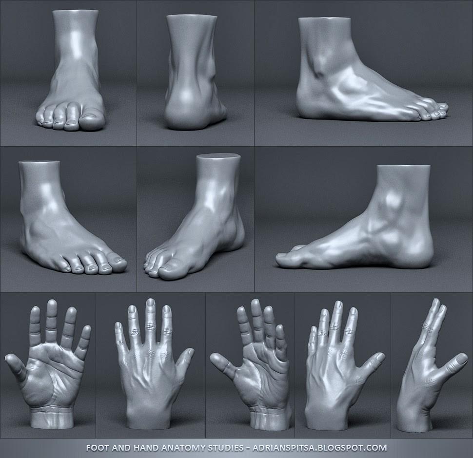 Adrian spitsa hand foot studies 2