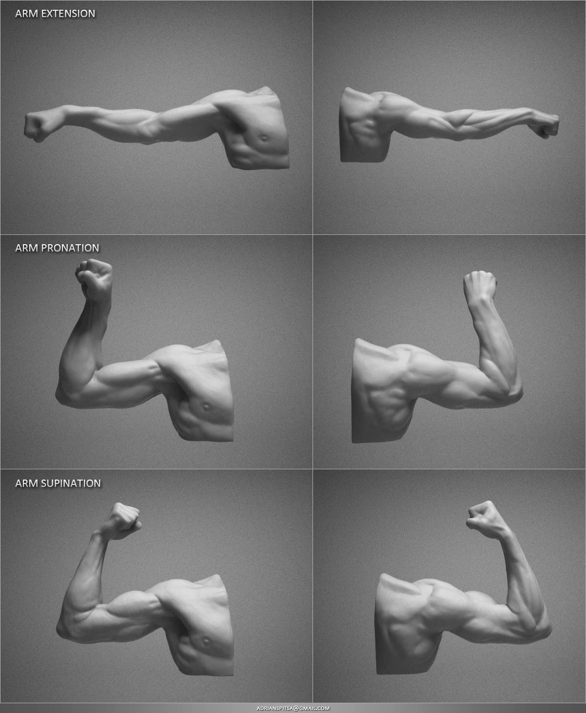 Adrian spitsa arm studies