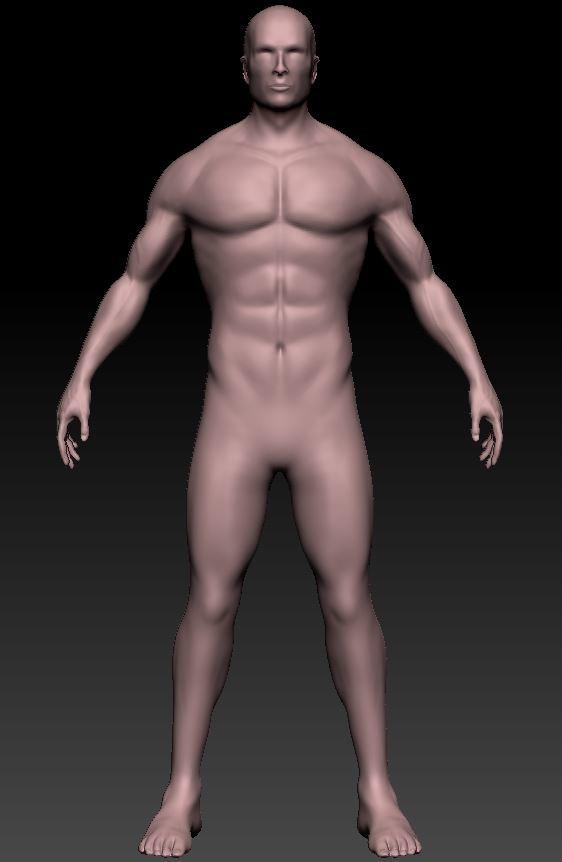 Peter Gray - Male Anatomy Sculpt