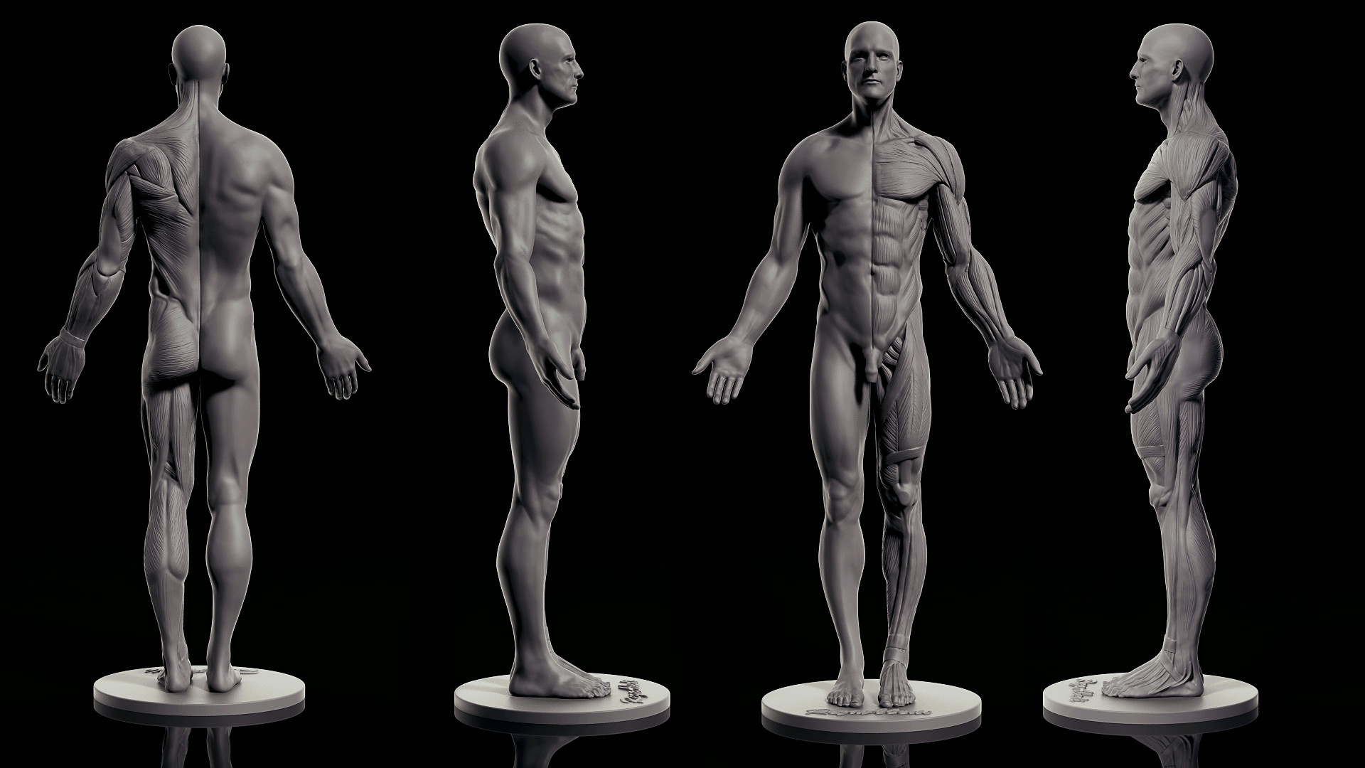 artstation - male anatomy, reza abedi, Human body