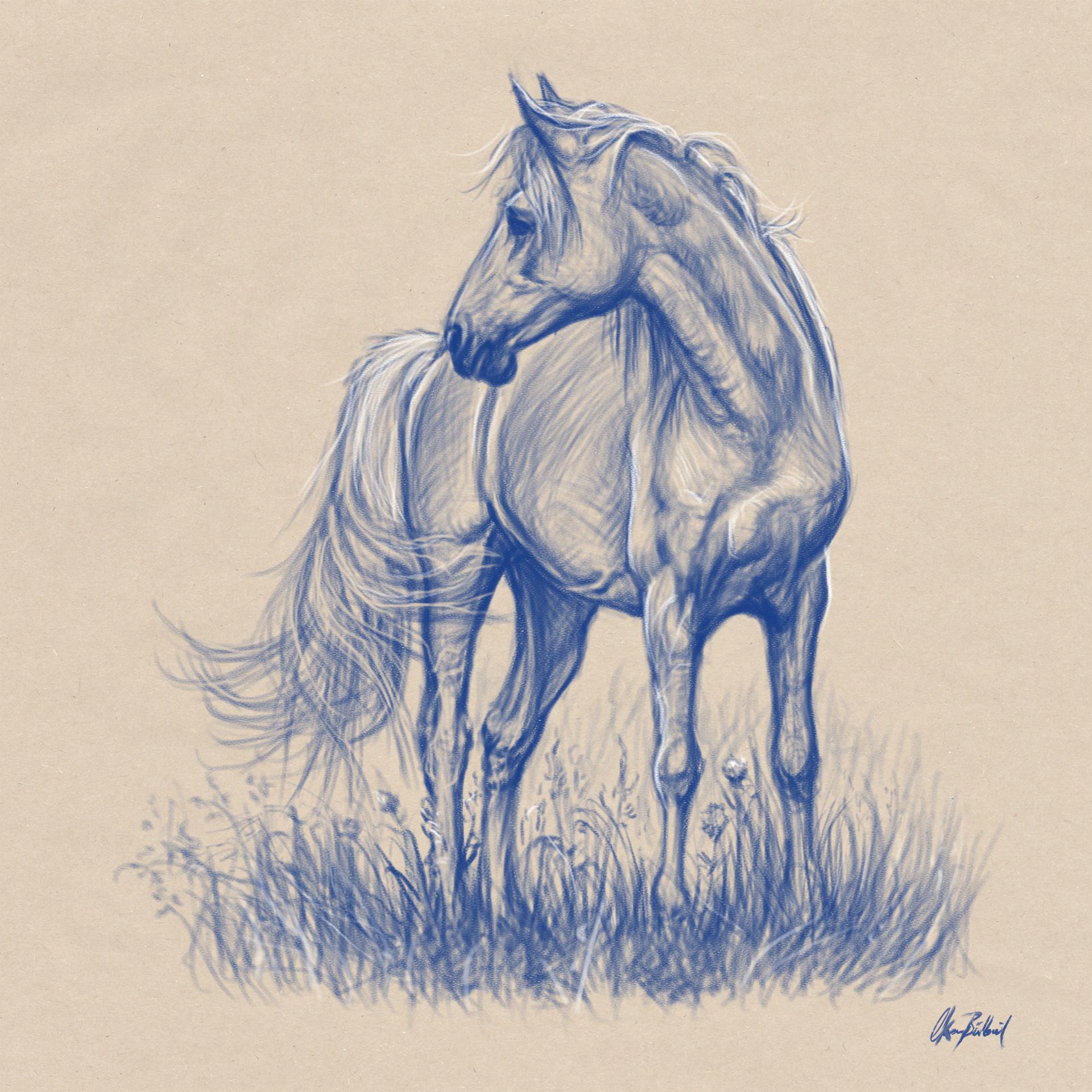 Okan Bulbul Horse Sketches