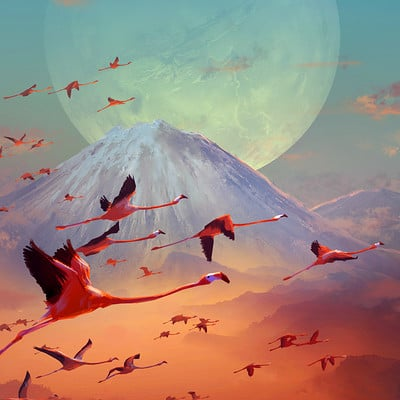 Sylvain sarrailh flamingo