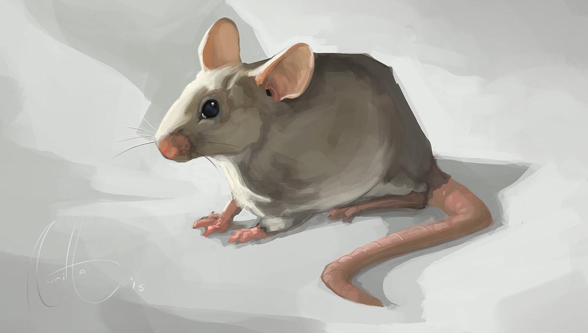 Nicolas morales 006 mice
