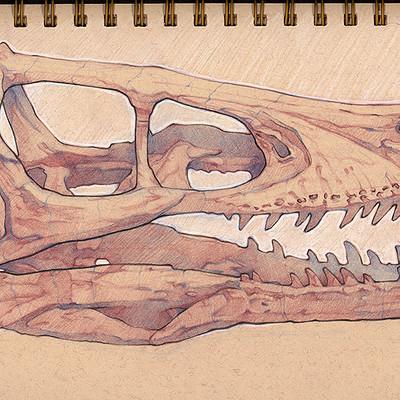 Charles hamel velociraptor skull
