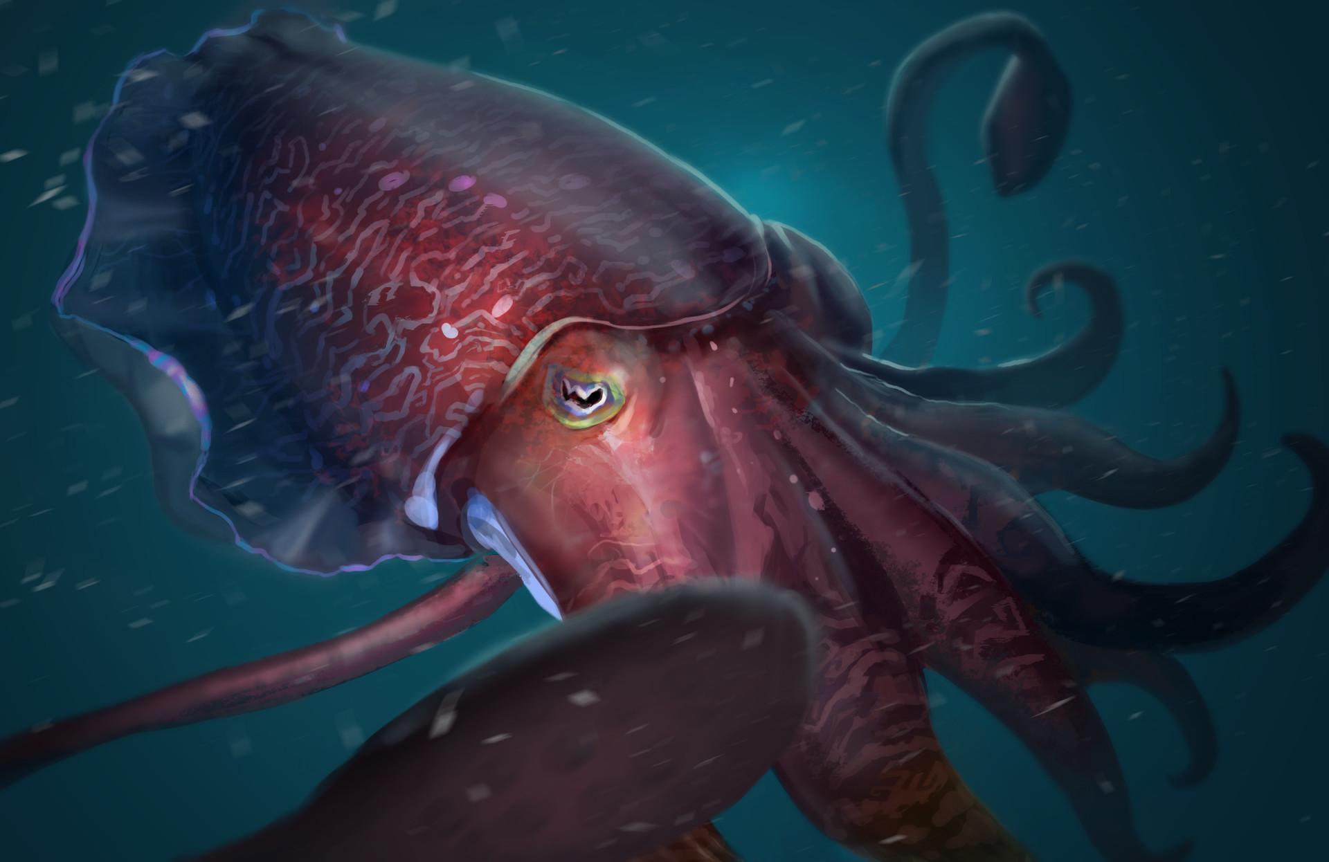 Gabriel ramos osc cuttlefish