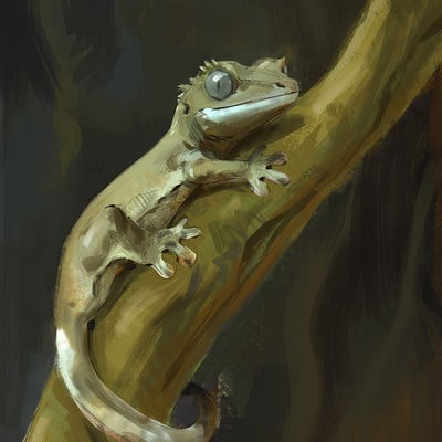 Jonathan kuo gecko1