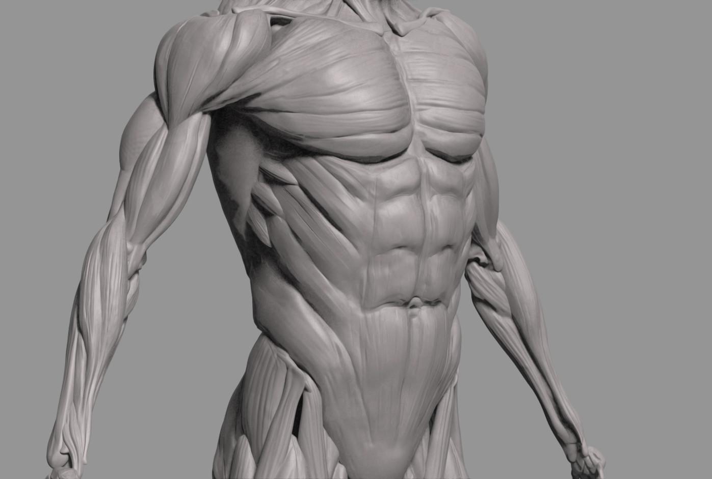 Eu Zeeng Study Human Anatomy Musle