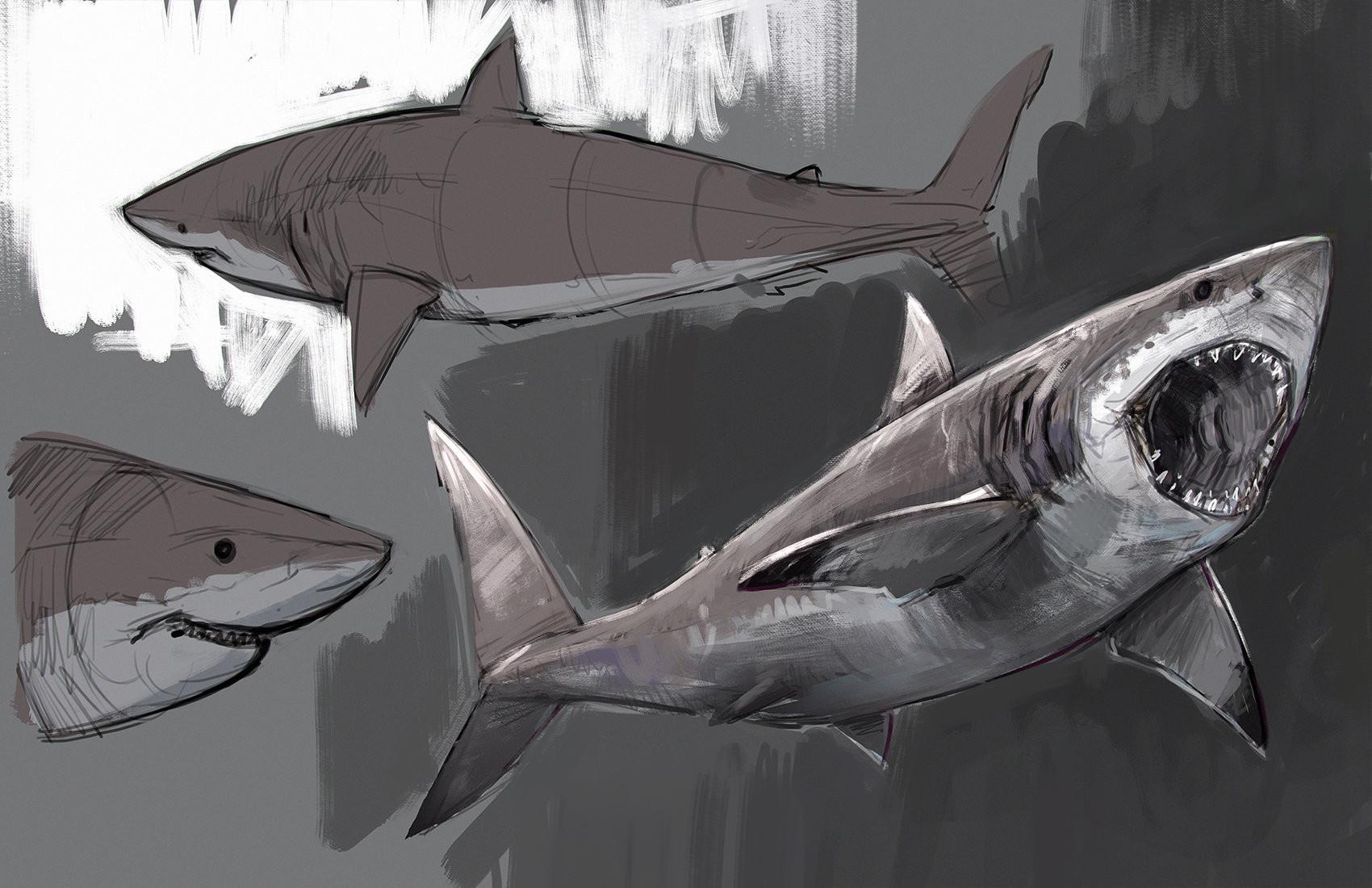 Jonathan kuo jonathan kuo shark