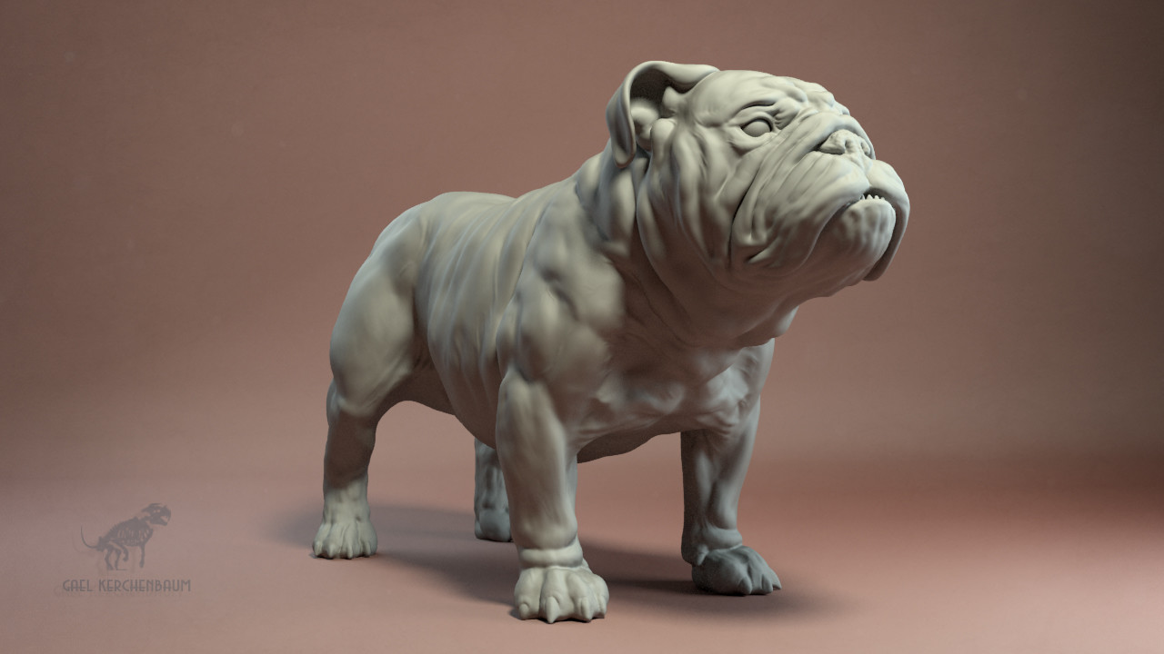 Gael kerchenbaum bulldog 005