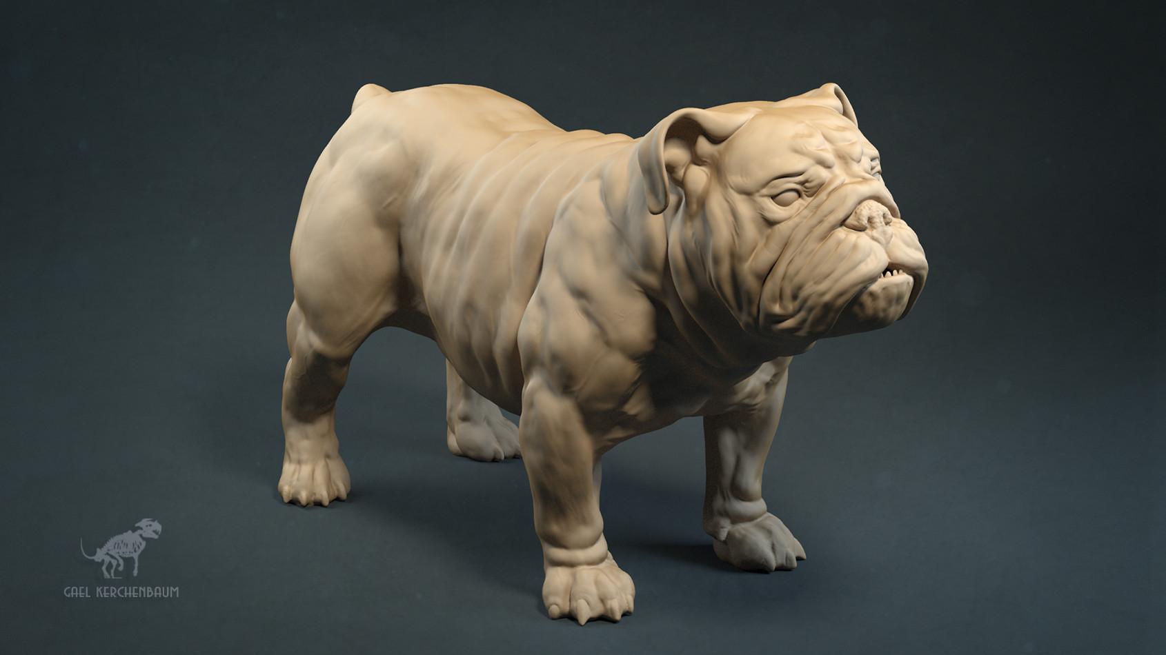Gael kerchenbaum bulldog 007