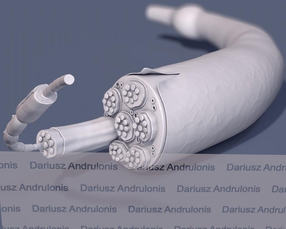 Dariusz andrulonis nerw