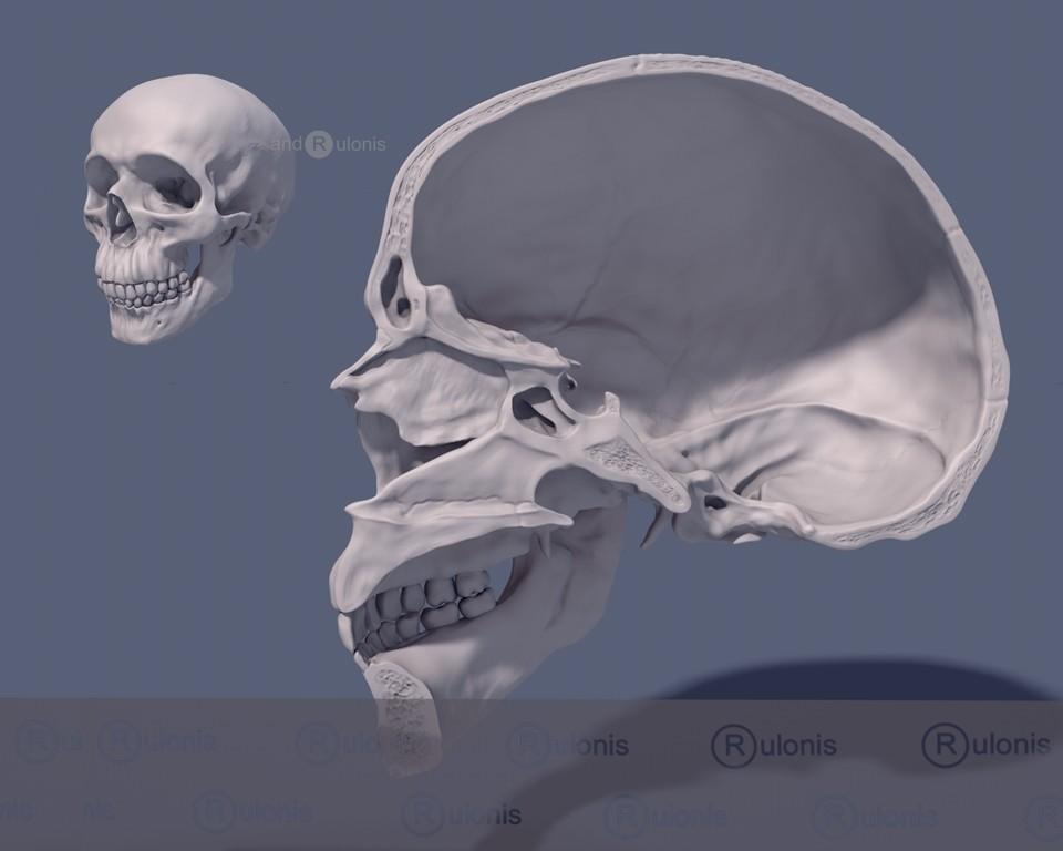 Dariusz andrulonis czaszka wew