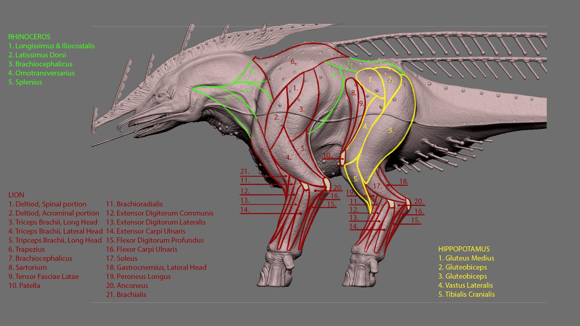 Jordi van hees anatomy explained inho slide 1