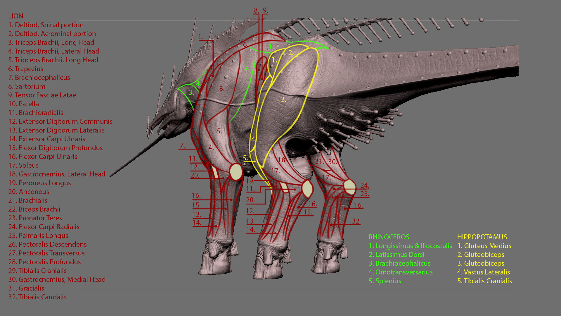 Jordi van hees anatomy explained inho slide 3