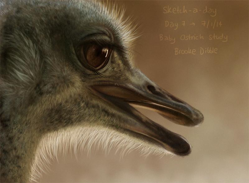 Misc bird quick paintings 2014