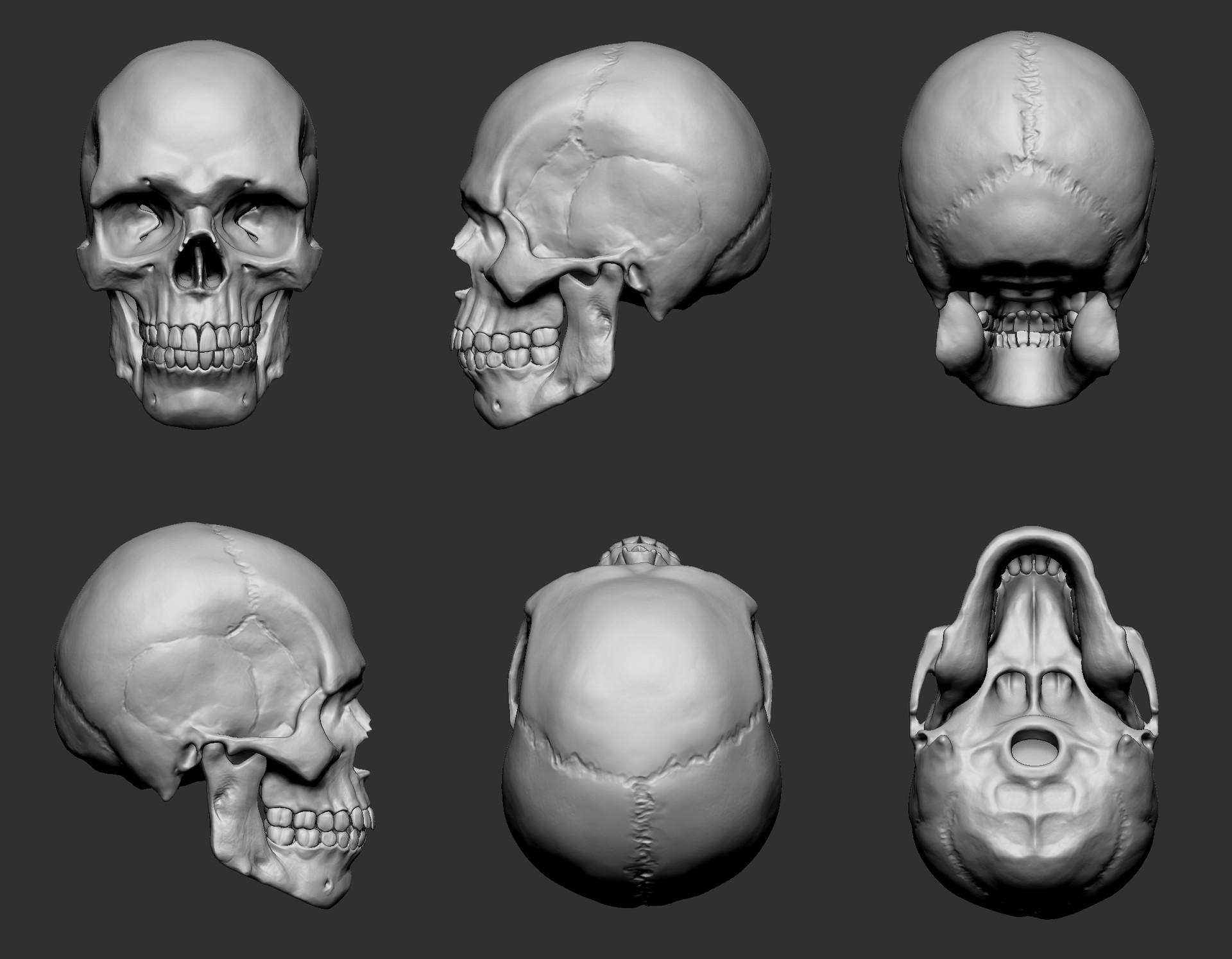 Marcelo prado craniorstrip