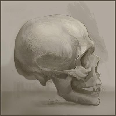 Brian roy skullstudy