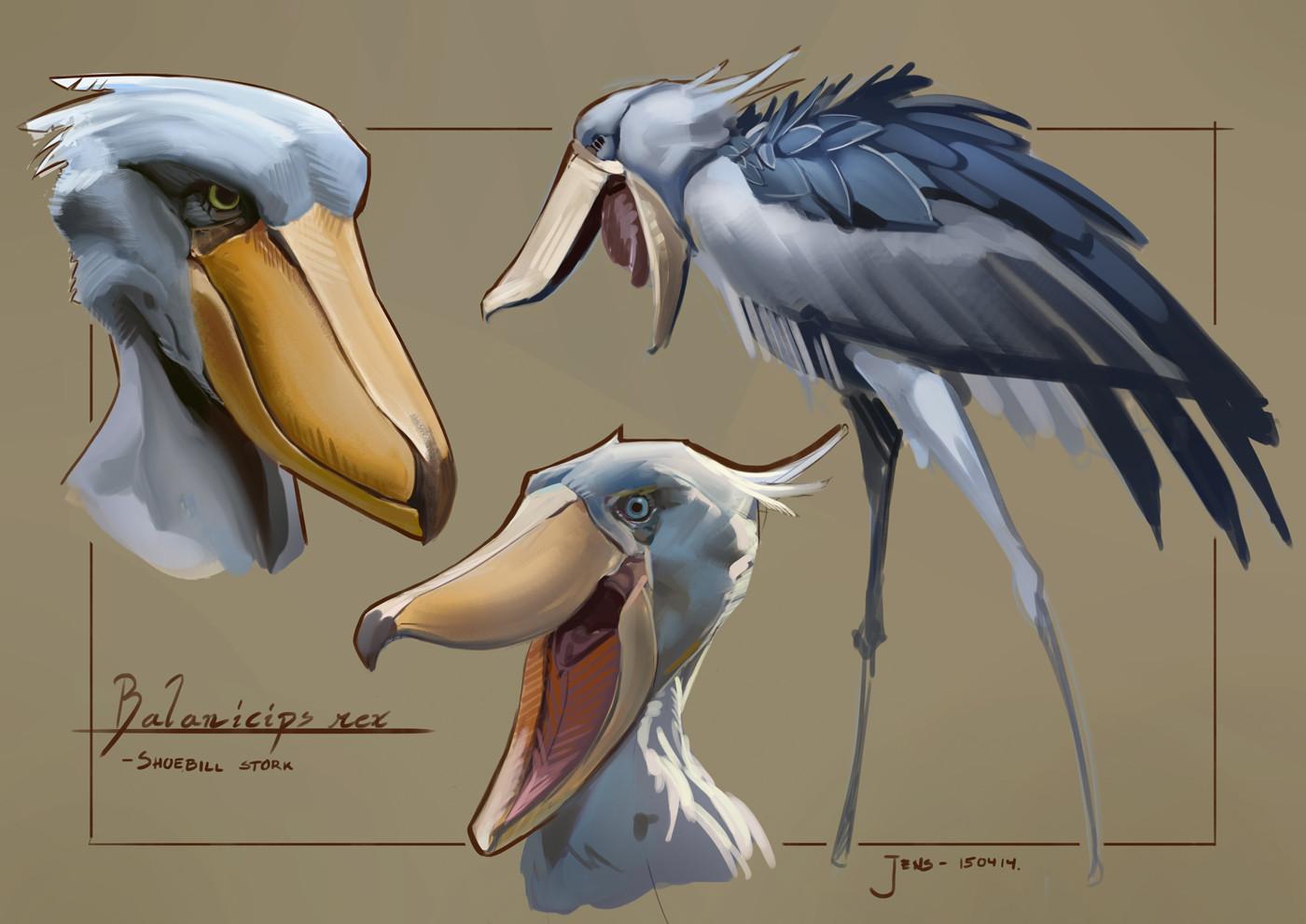 Jens bengtsson shoebill studies