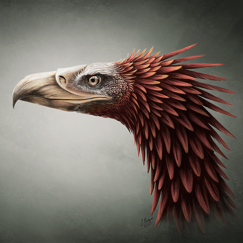 Mr. Feathers