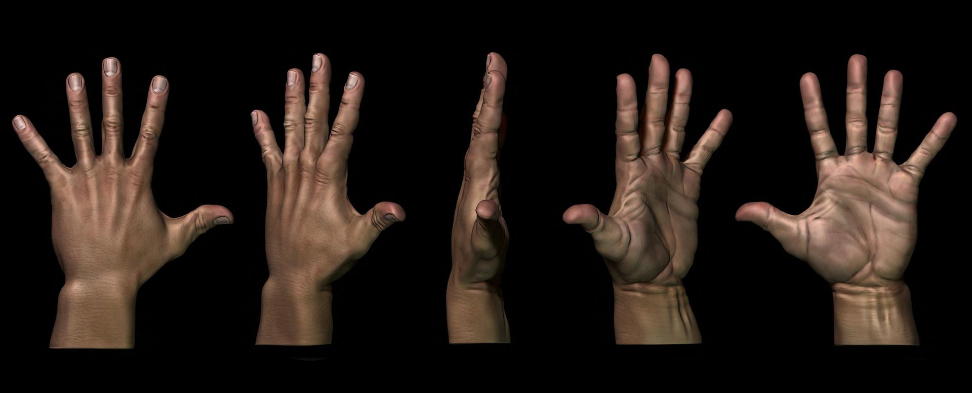 ArtStation - Hand anatomy, Jaime Asins Ferrandiz