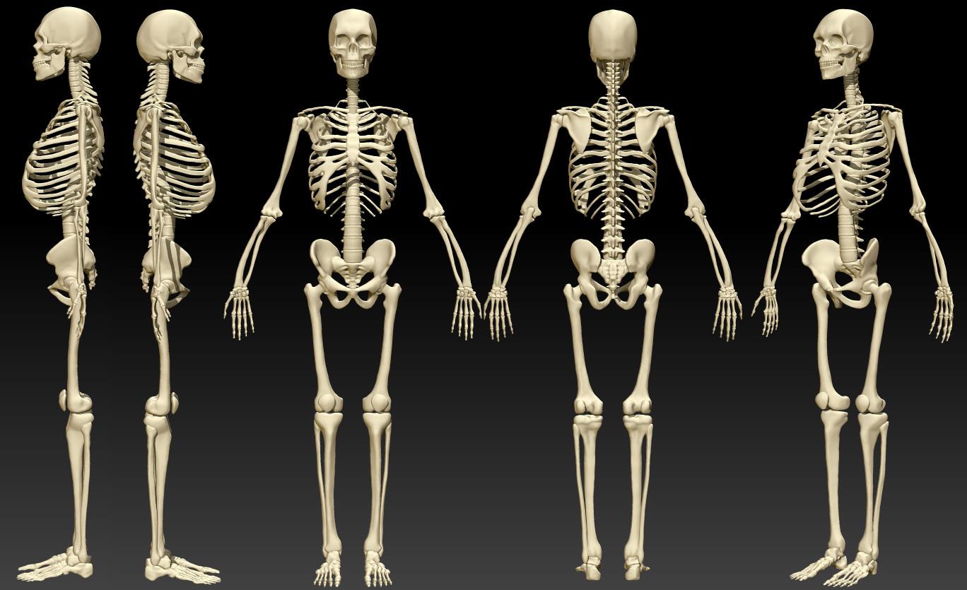 Artstation Anatomy Study 2015 Ruslan Gadzhiev