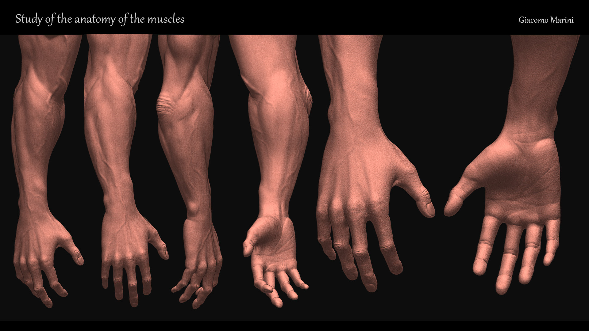 ArtStation - study of the anatomy of the muscles, Giacomo Marini