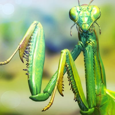 Sascha kozacenko mantis image big