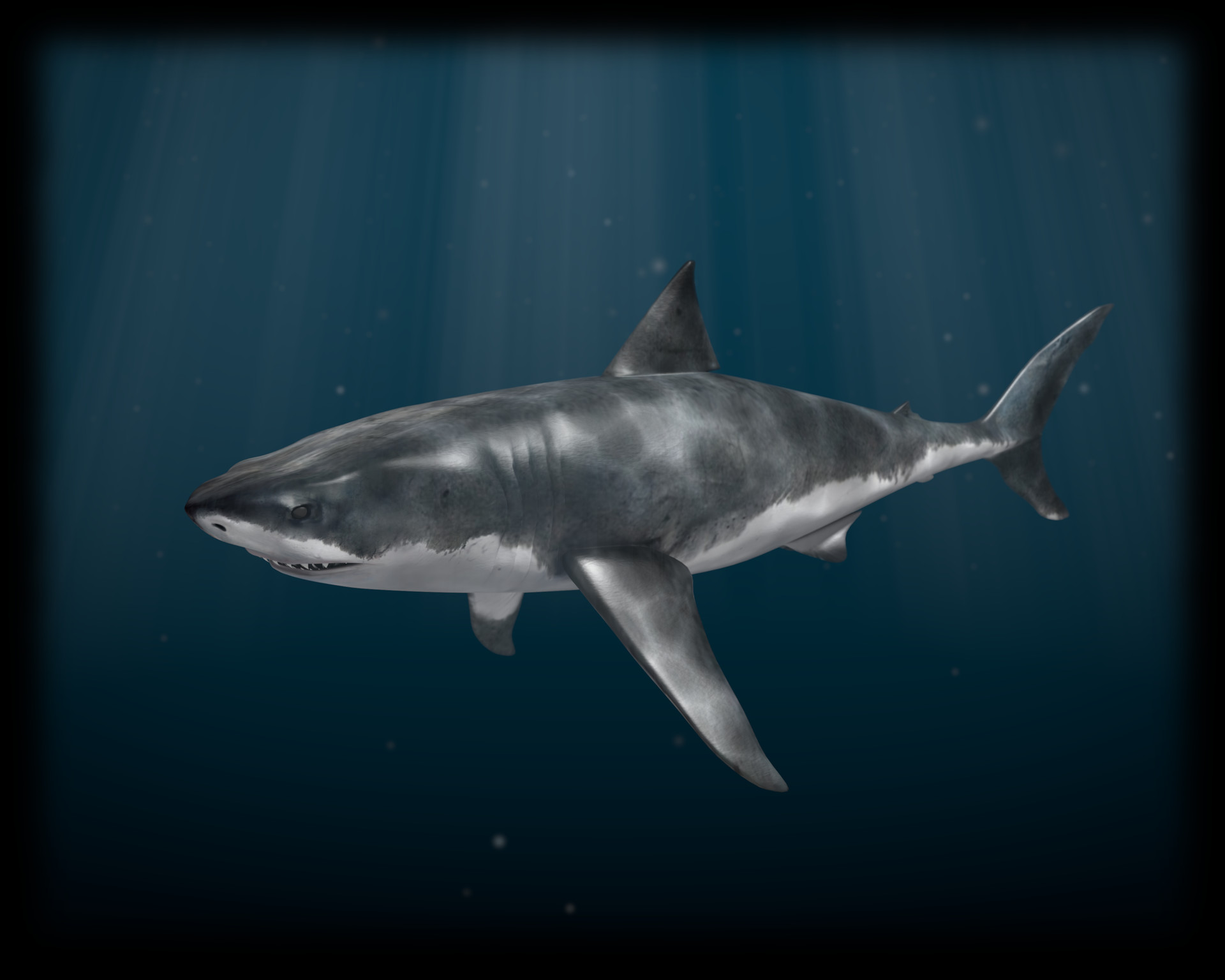 Mako shark wallpaper