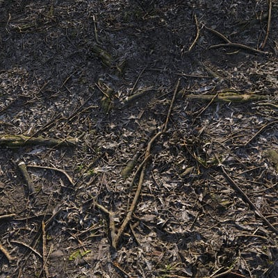 Christoph schindelar forestfloor 02 d 01