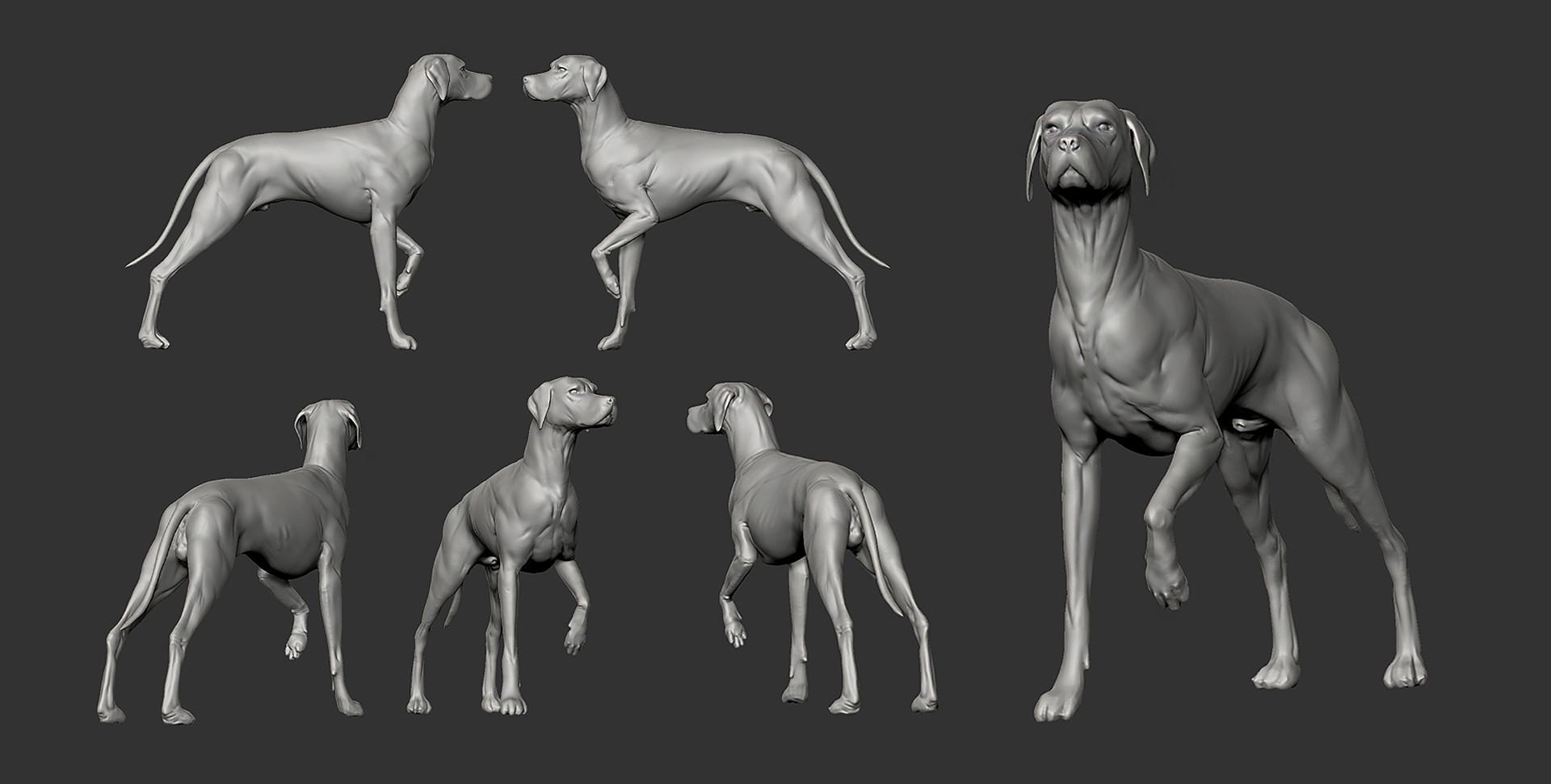 Andrea chiampo dog sketch 3dtotal