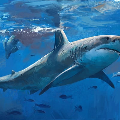 Jonathan kuo shark