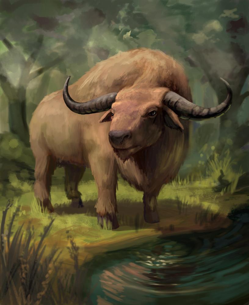 Trotting Buffalo