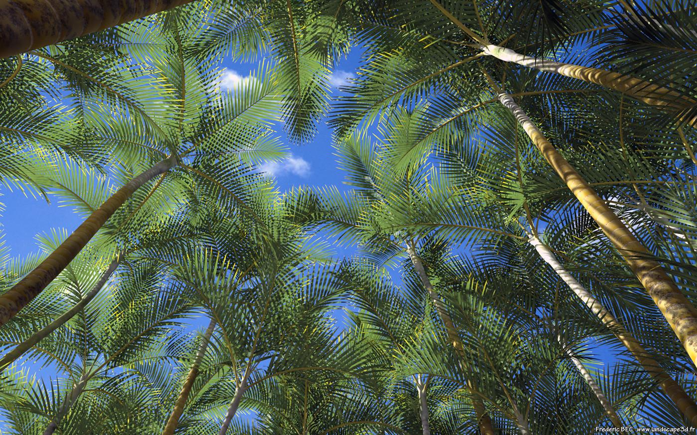 Frédéric Bec - Dypsis lutescens (Chrysalidocarpus ...