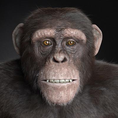 Adam sacco adam sacco chimp2b