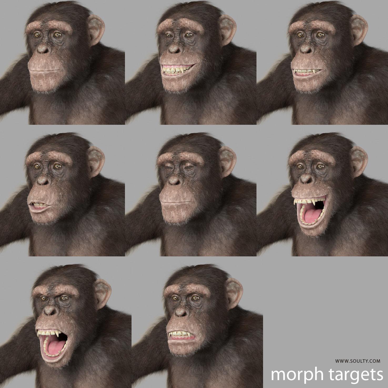 morph targets