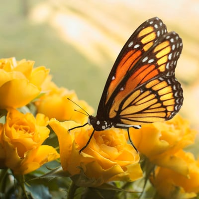 Krzysztof gryzka butterfly 01