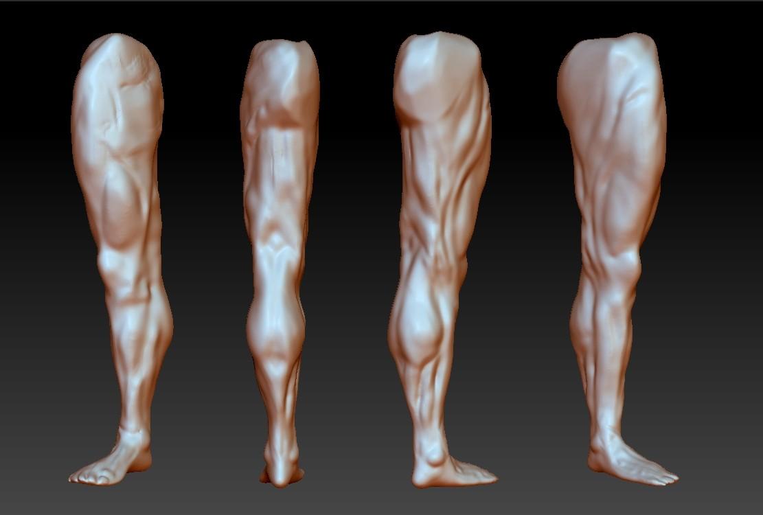 Artstation Human Anatomy Leg Dj Choi