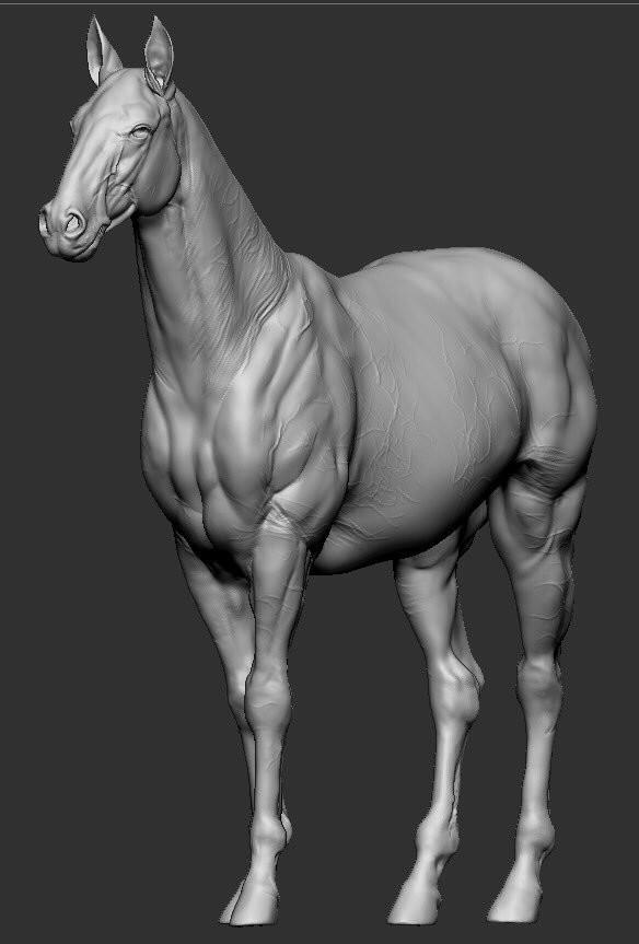 ArtStation - Horse anatomy study, fumi nakai