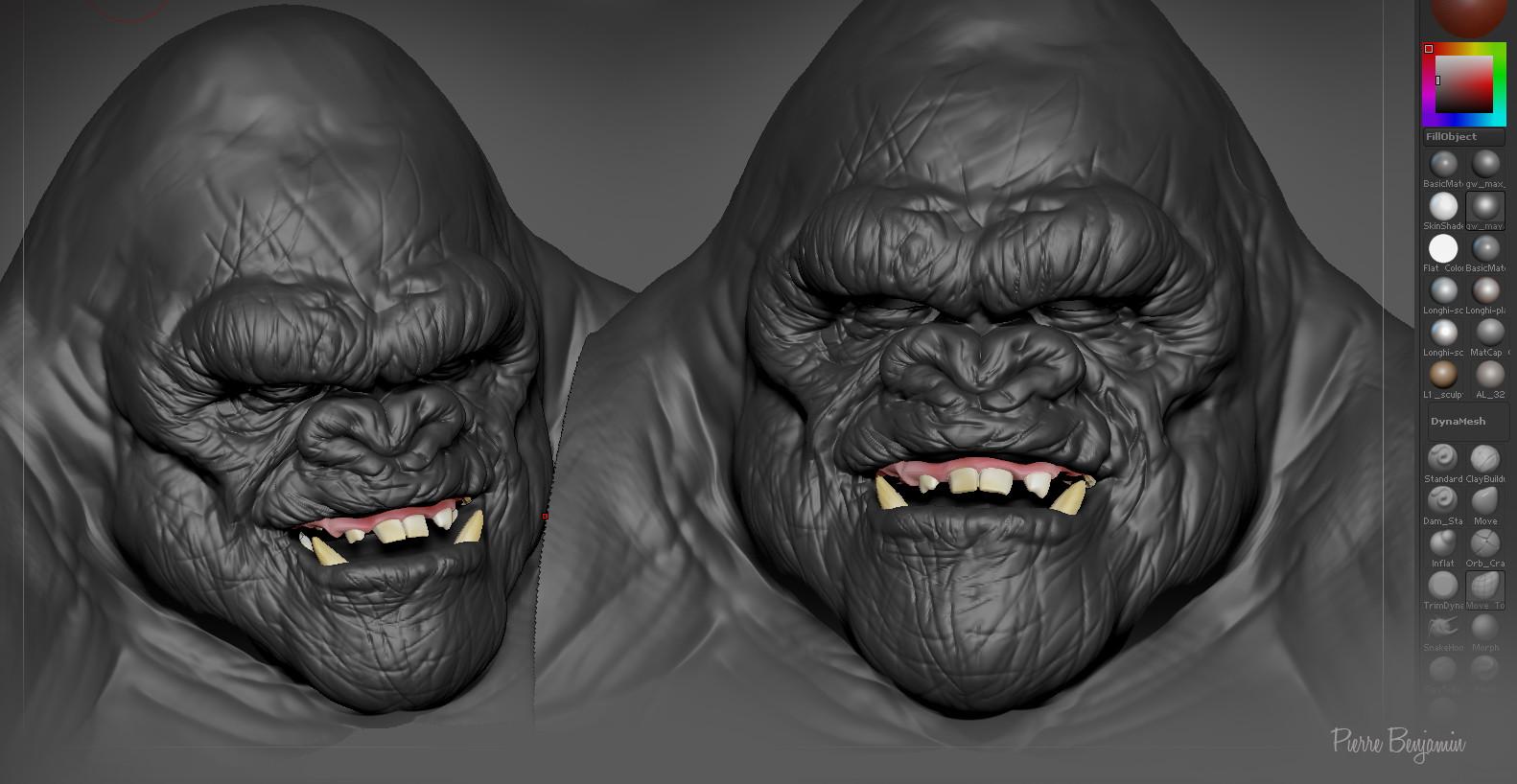 Pierre benjamin gorilla 004