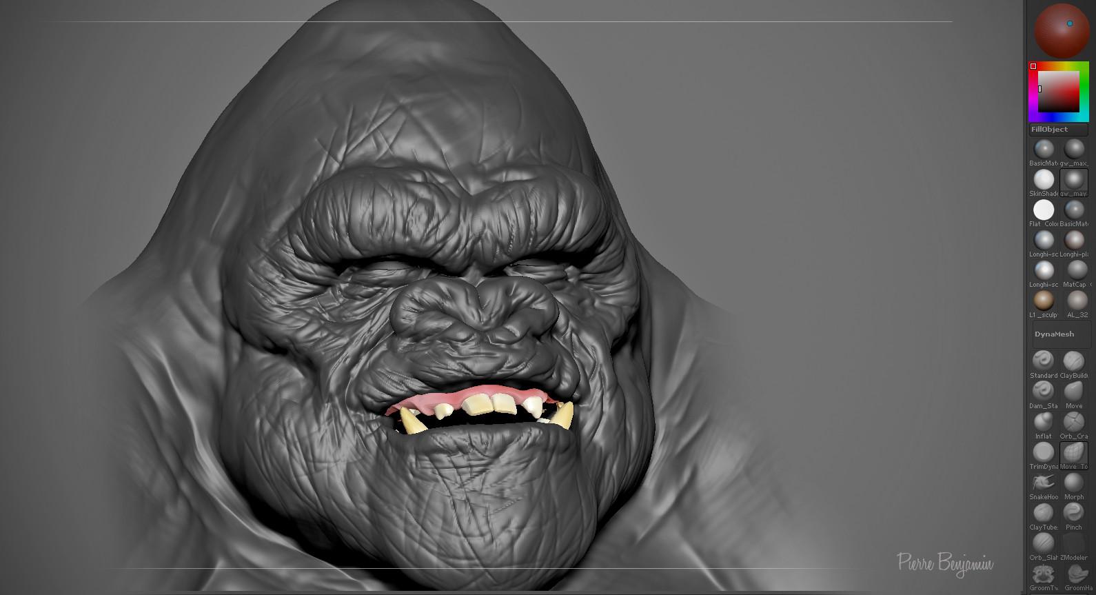 Pierre benjamin gorilla 001