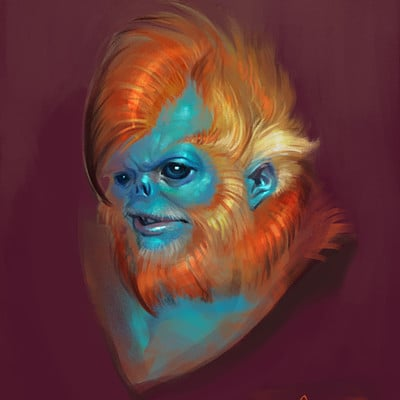 Sabbas apterus annoyed snub nosed monkey man
