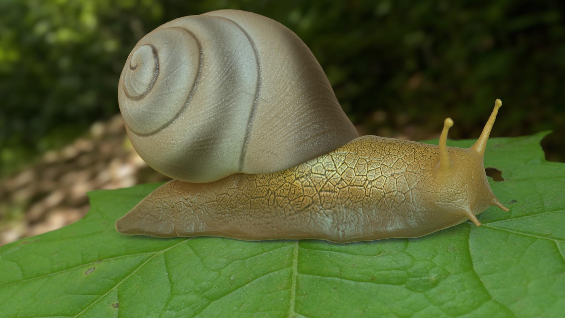 Ehab charek snail2