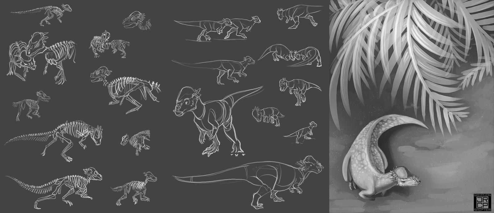 11: Pachycephalosaurus